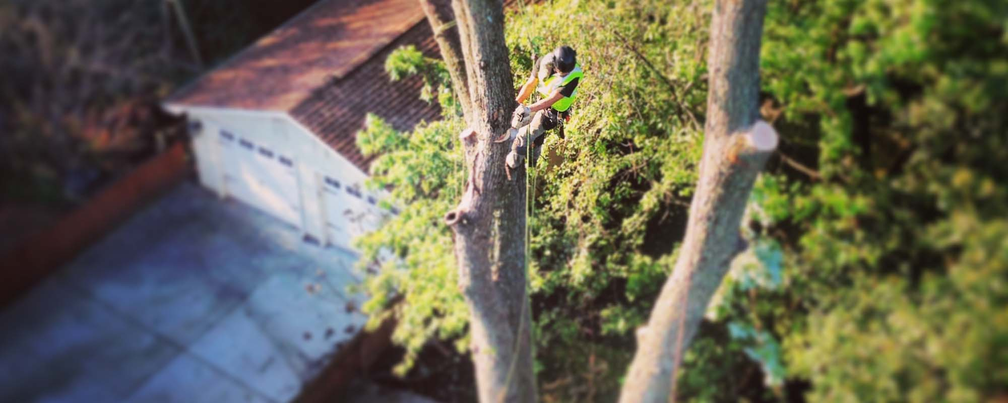 NJ tree removal service worker cutting a tree down while hanging from ropes