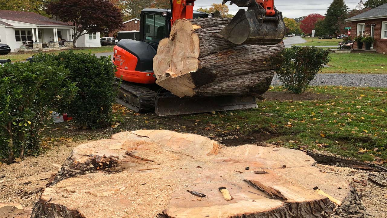 Jersey Shore tree removal business moving a huge cut down tree trunk by machine