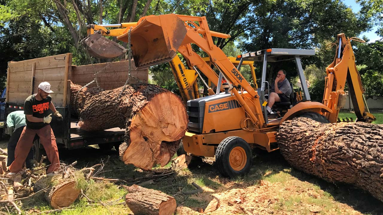 NJ Tree removal company moving huge tree trunks with an excavator machine