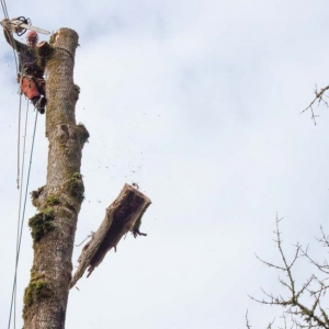 NJ Tree removal business near me cutting down a tree while hanging by ropes