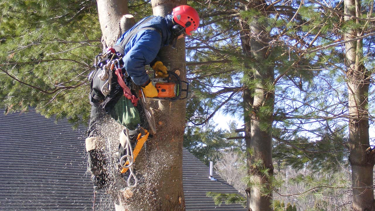 New Jersey local tree removal business cutting a tree down while climbing with ropes