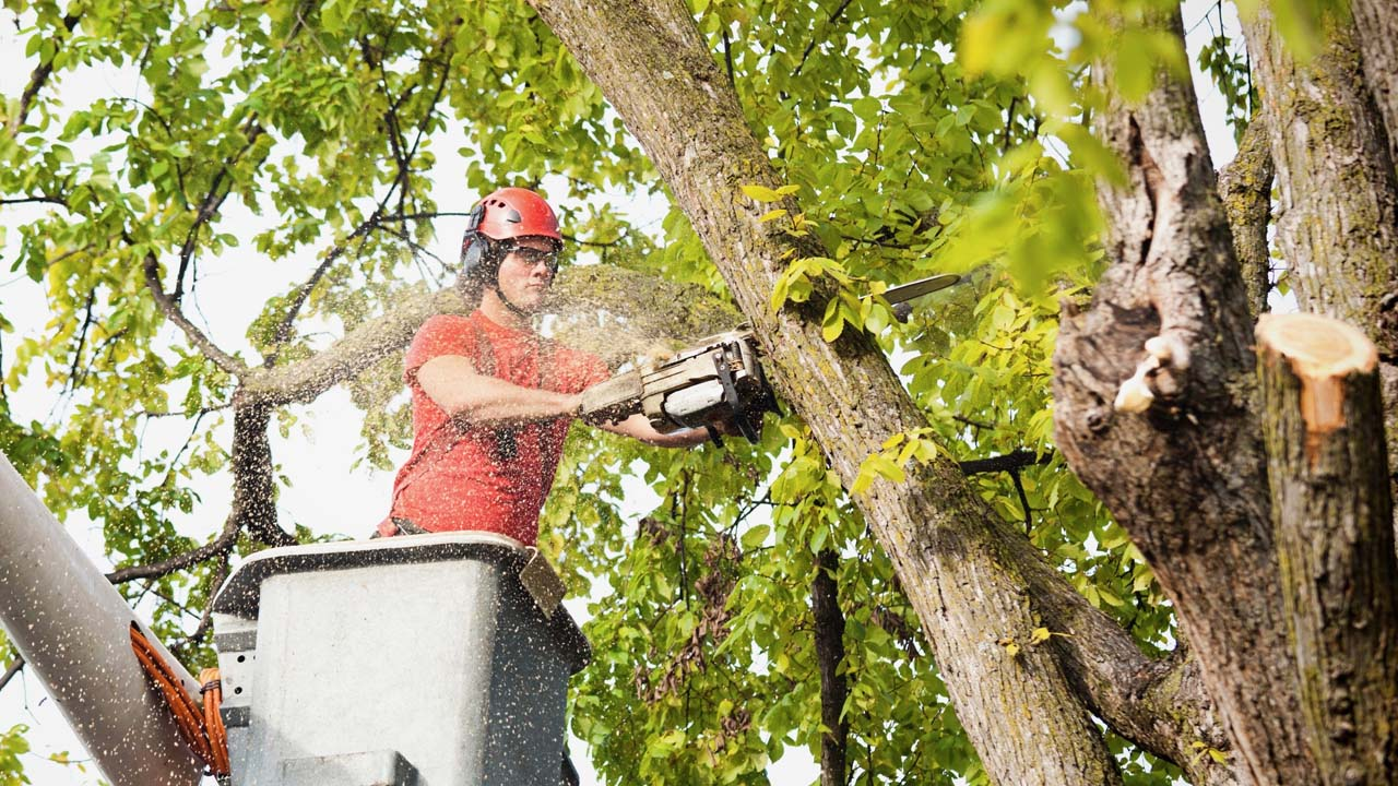 New Jersey tree removal experts cutting down a tree while in a bucket truck