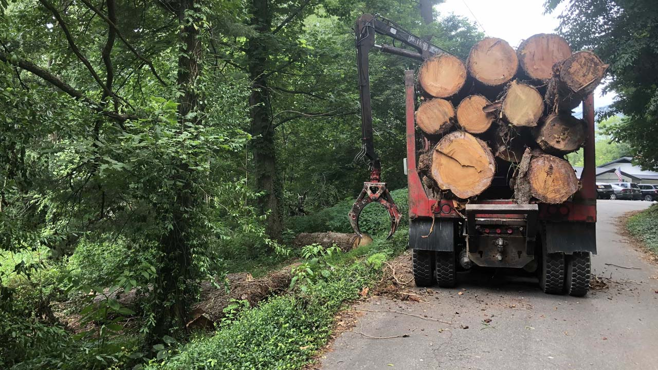 NJ local tree removal business hauling away cut down tree trunks in a big truck with claw