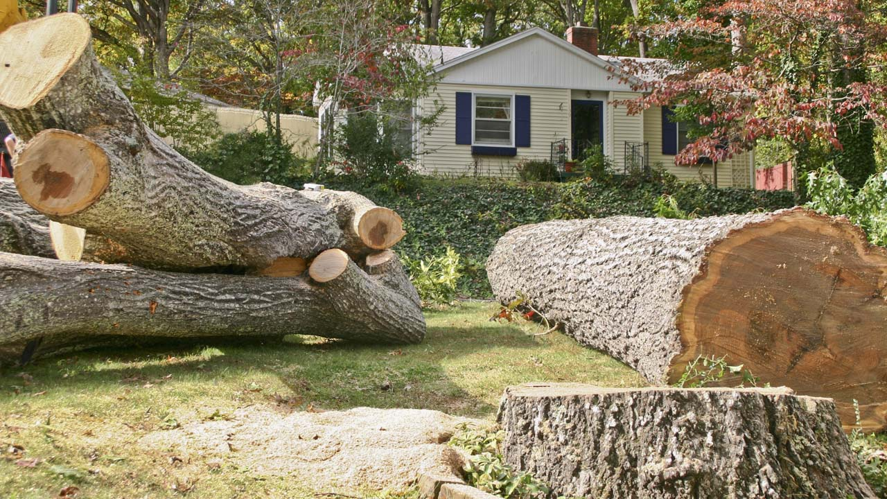 NJ tree removal service local company cuts down huge tree trunks