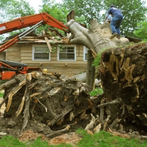 Tree Service NJ cutting down a tree that fell on a house