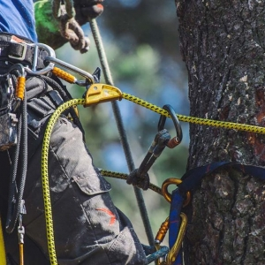 tree removal NJ closup of a workers climbing ropes