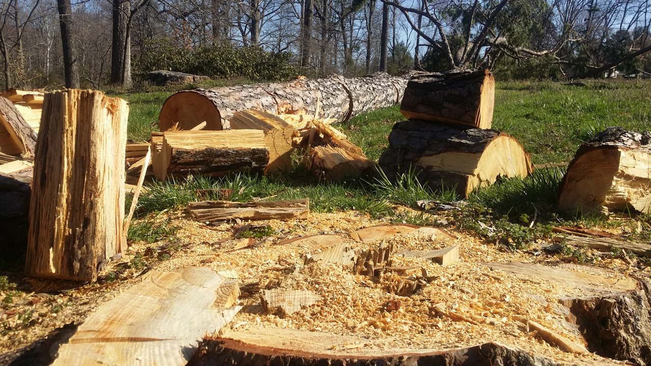 tree removal service New Jersey closup view of cut down tree trunks
