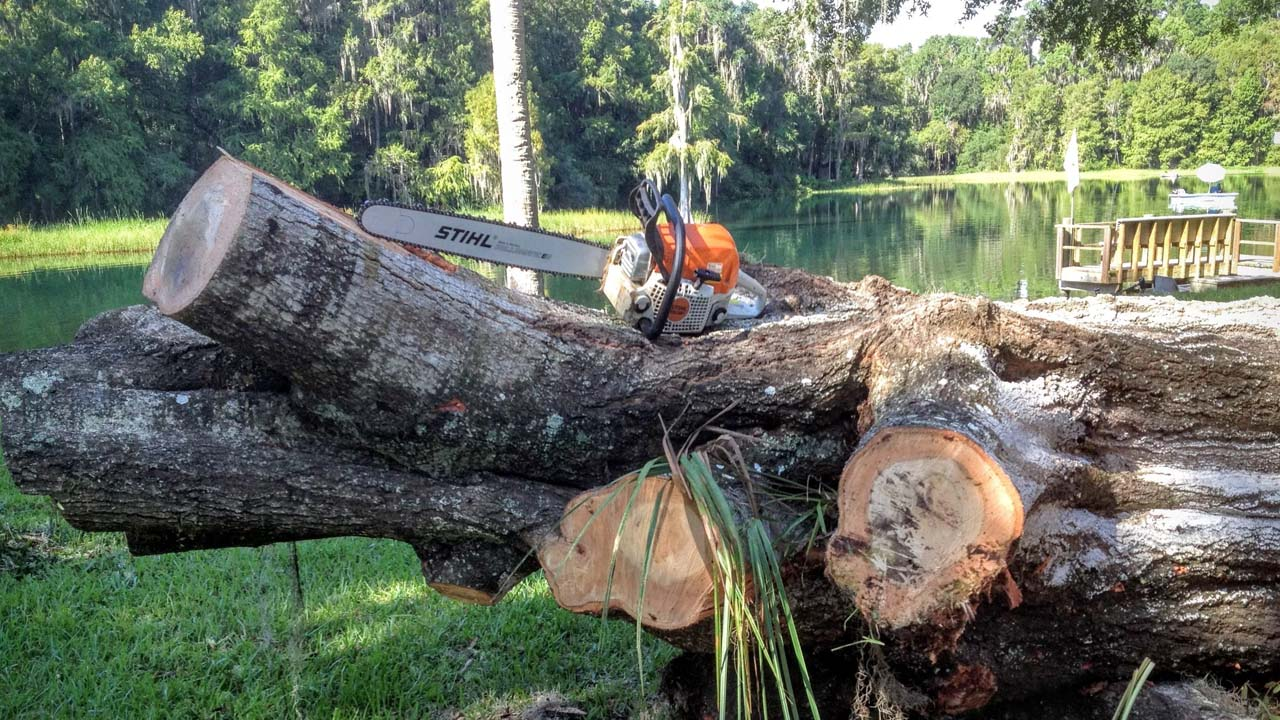 tree service NJ pic of huge cut down tree trunk with a stihl chainsaw