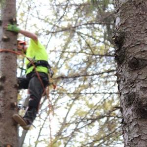 tree service NJ view of a tree climber