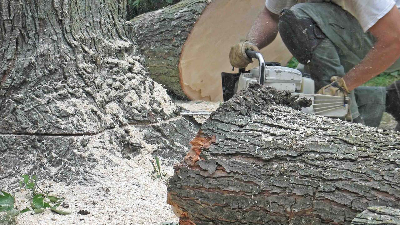 NJ local tree service near me closeup pic of cutting down a tree with a chainsaw