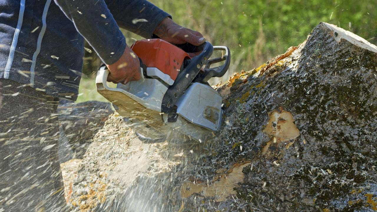 NJ tree removal service near me closup pic of cutting into a huge tree trunk with a chainsaw