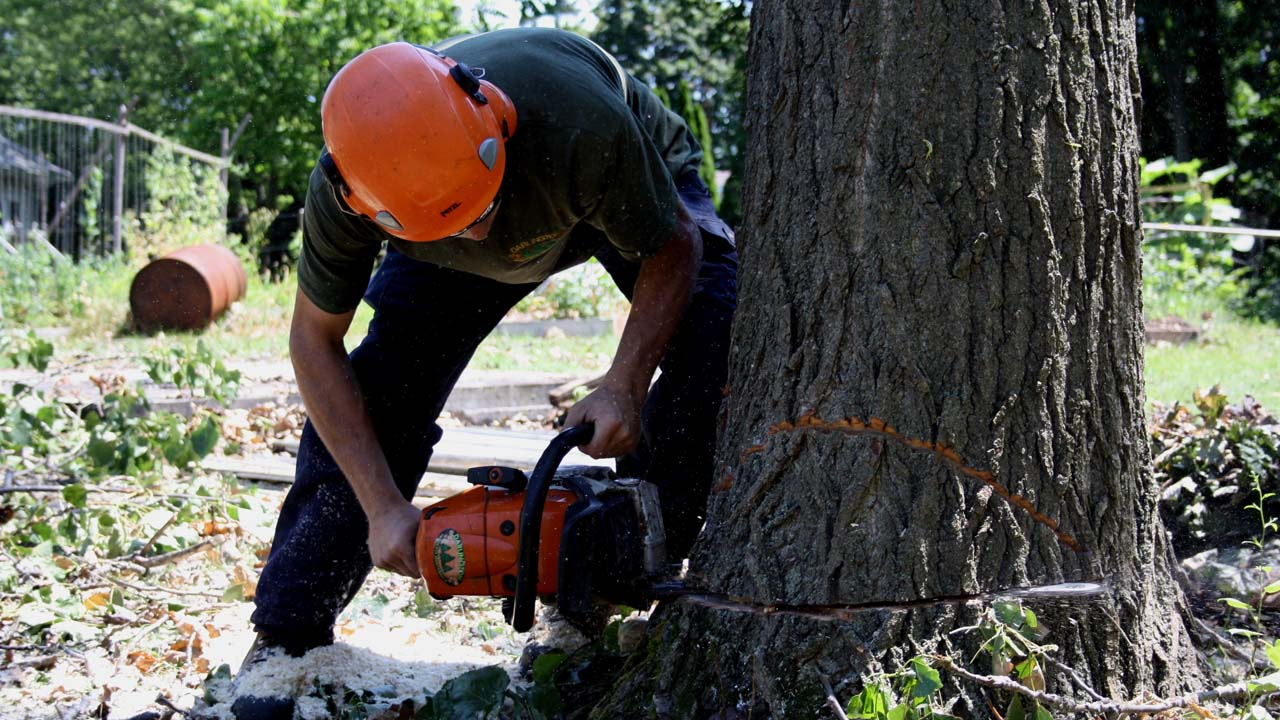 NJ tree removal service near me cutting into a huge tree with a chainsaw