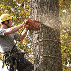 NJ tree service near me closup of worker cutting down a tree while hanging by ropes