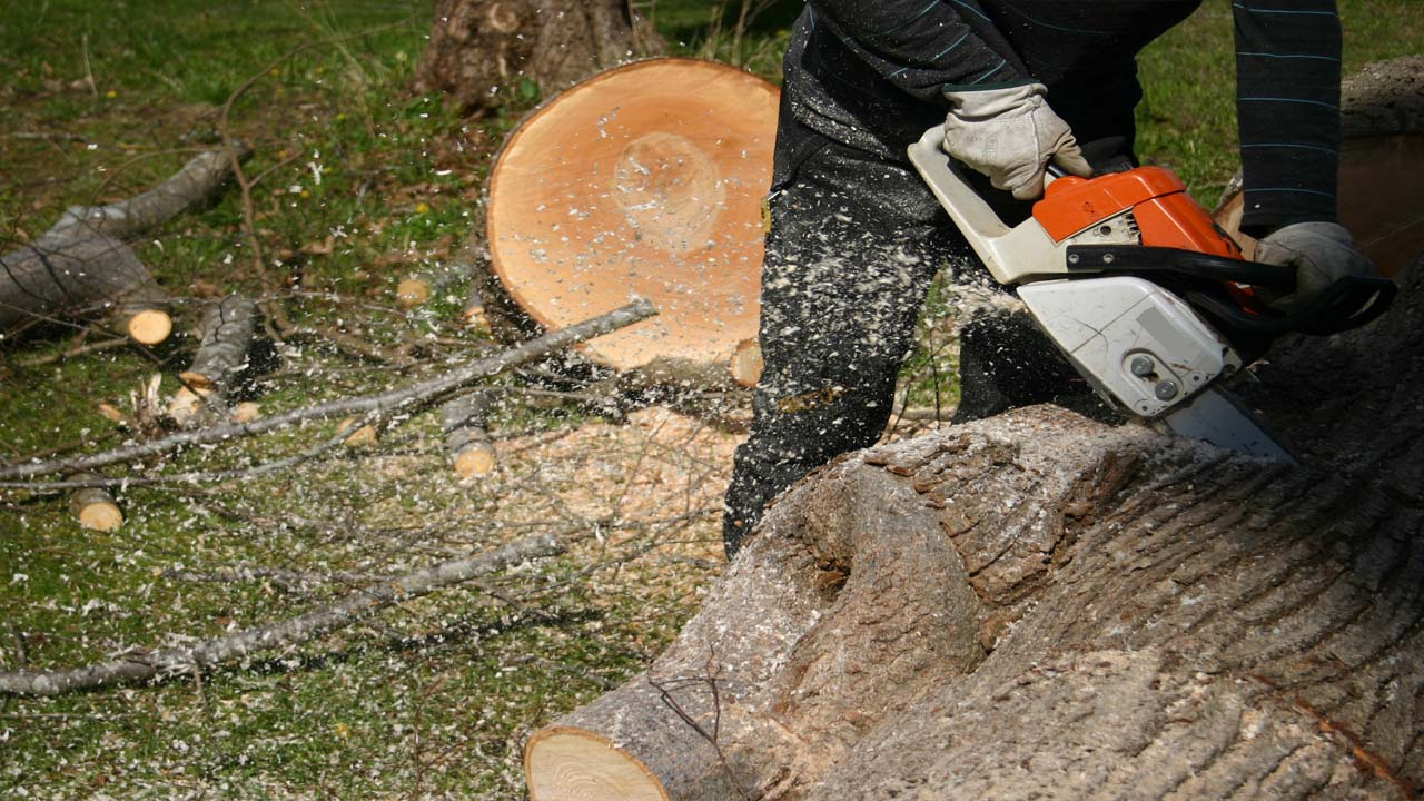 NJ tree removal service cutting into a tree trunk on the ground with a chainsaw closeup pic