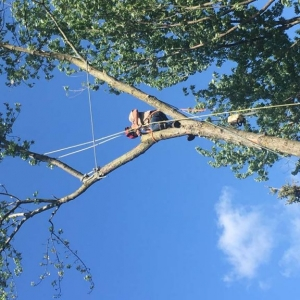 Tree Service NJ pic of tree service climbing a tree with ropes