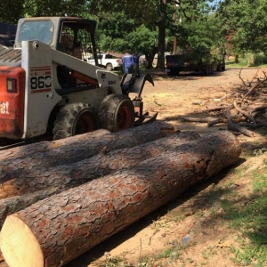 New Jersey Tree Removal Service peices of a tree cut up with bobcat