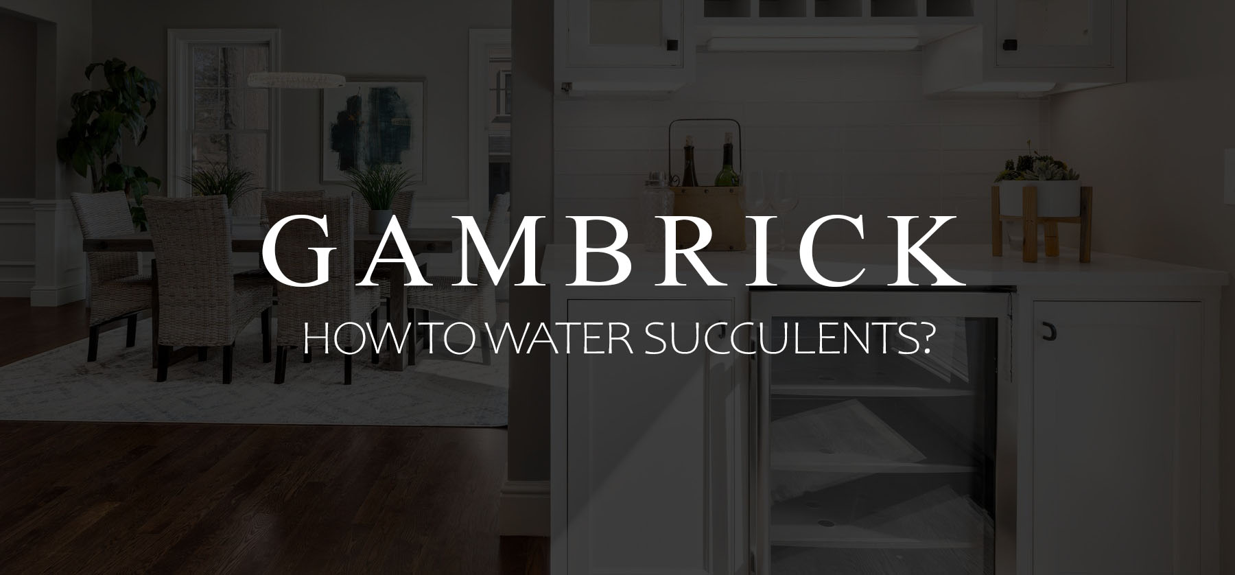 How to water succulents banner picture