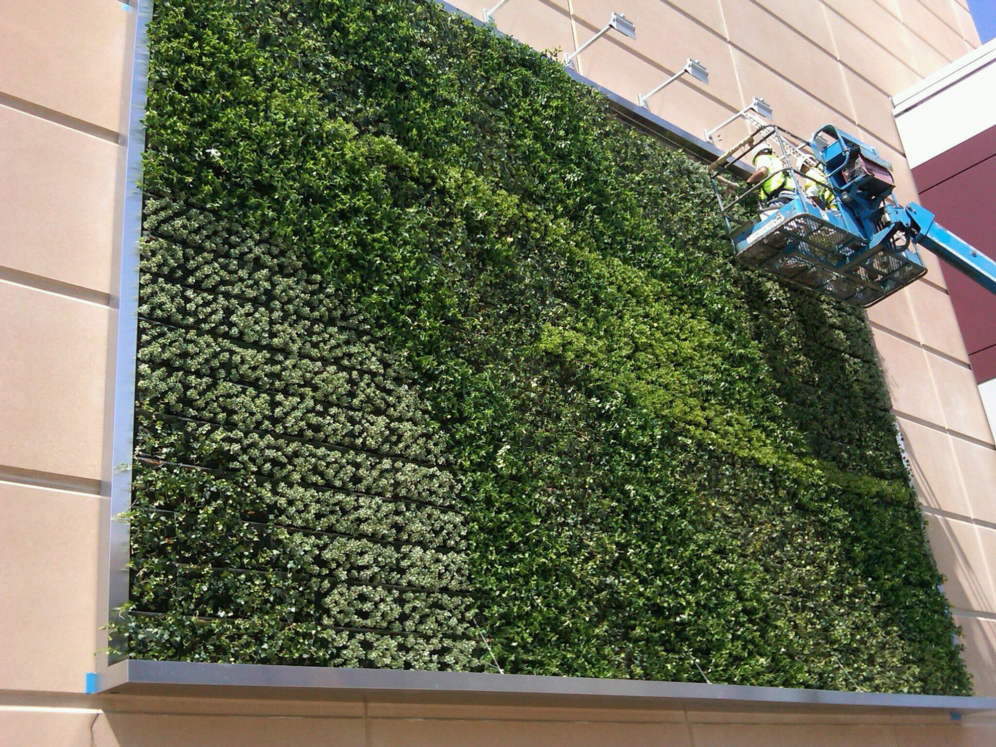 Maintenance work being done on a living green wall.