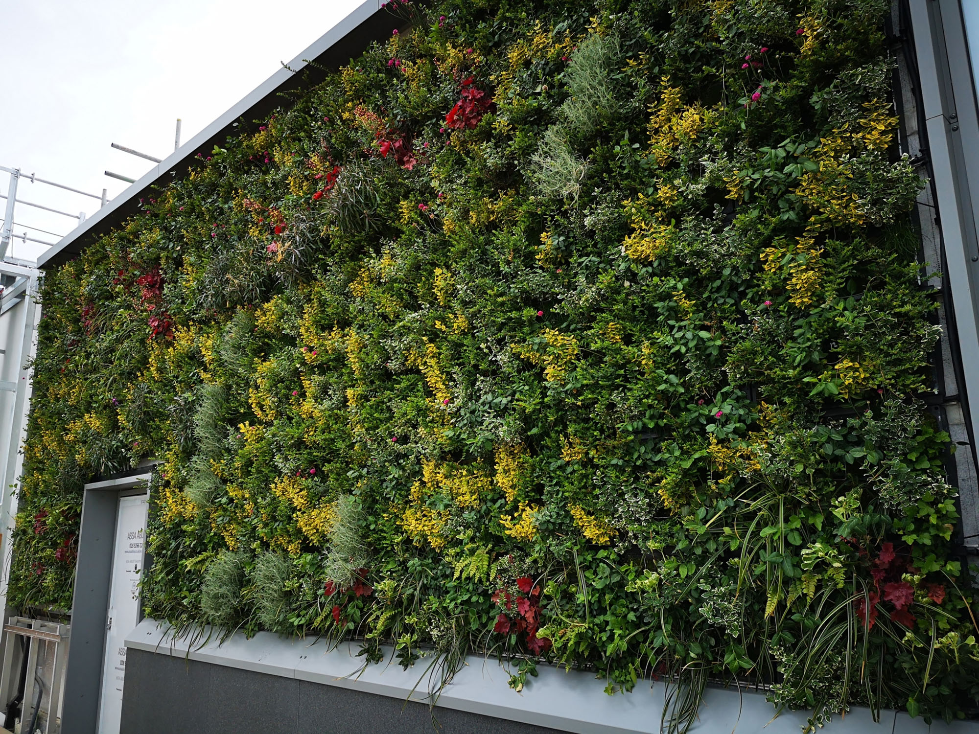 Green Eco wall on the side of a store wrapped around the door.
