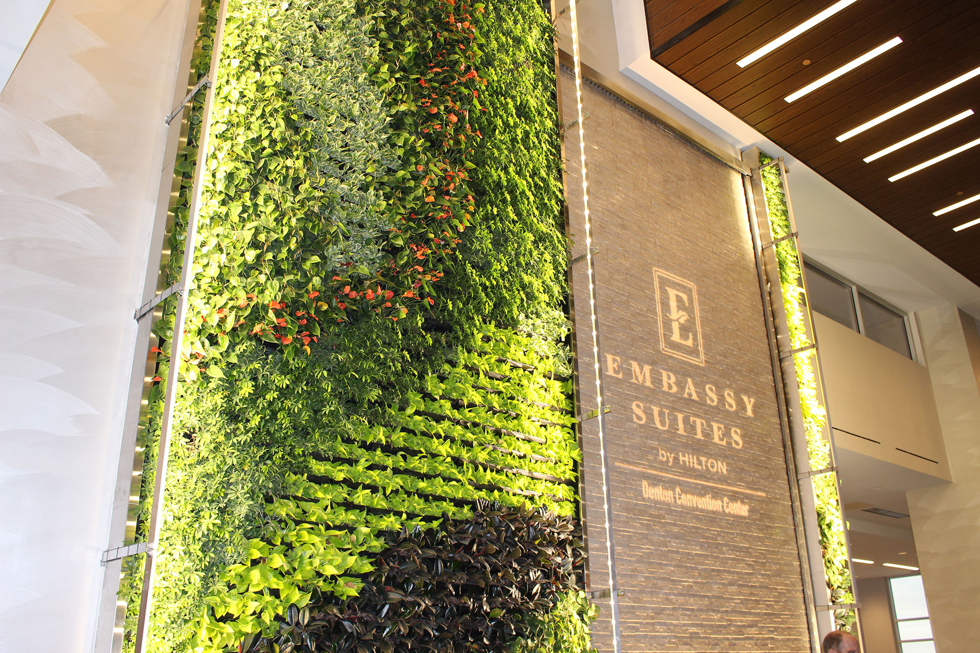 Beautiful living green plant wall inside the Embassy Suites by Hilton.
