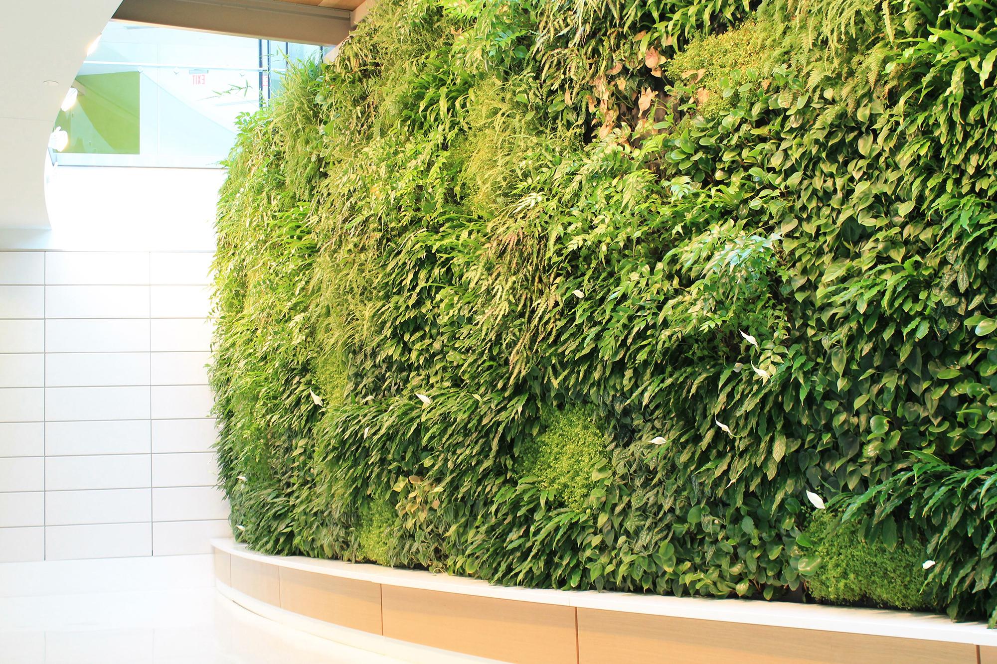 Lush living green eco wall inside a building's lobby.