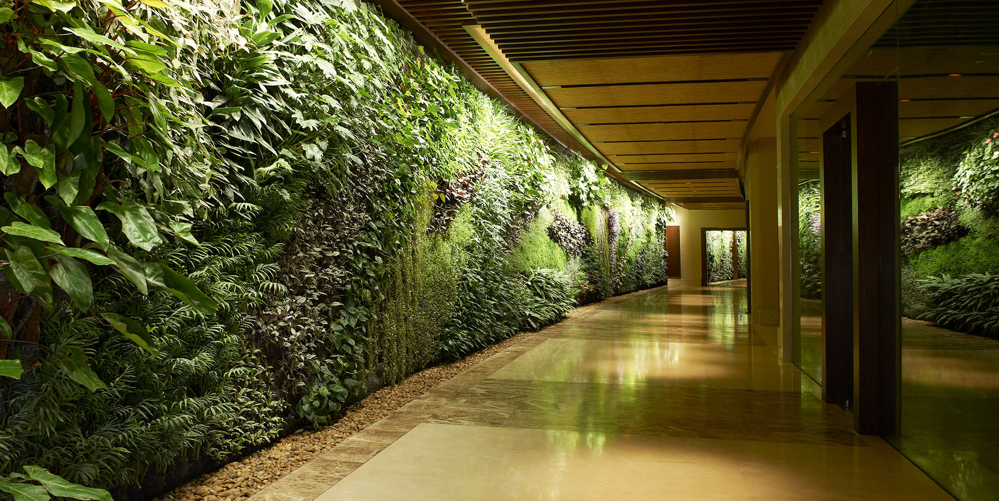 Lush living plant wall in this modern style hallway.