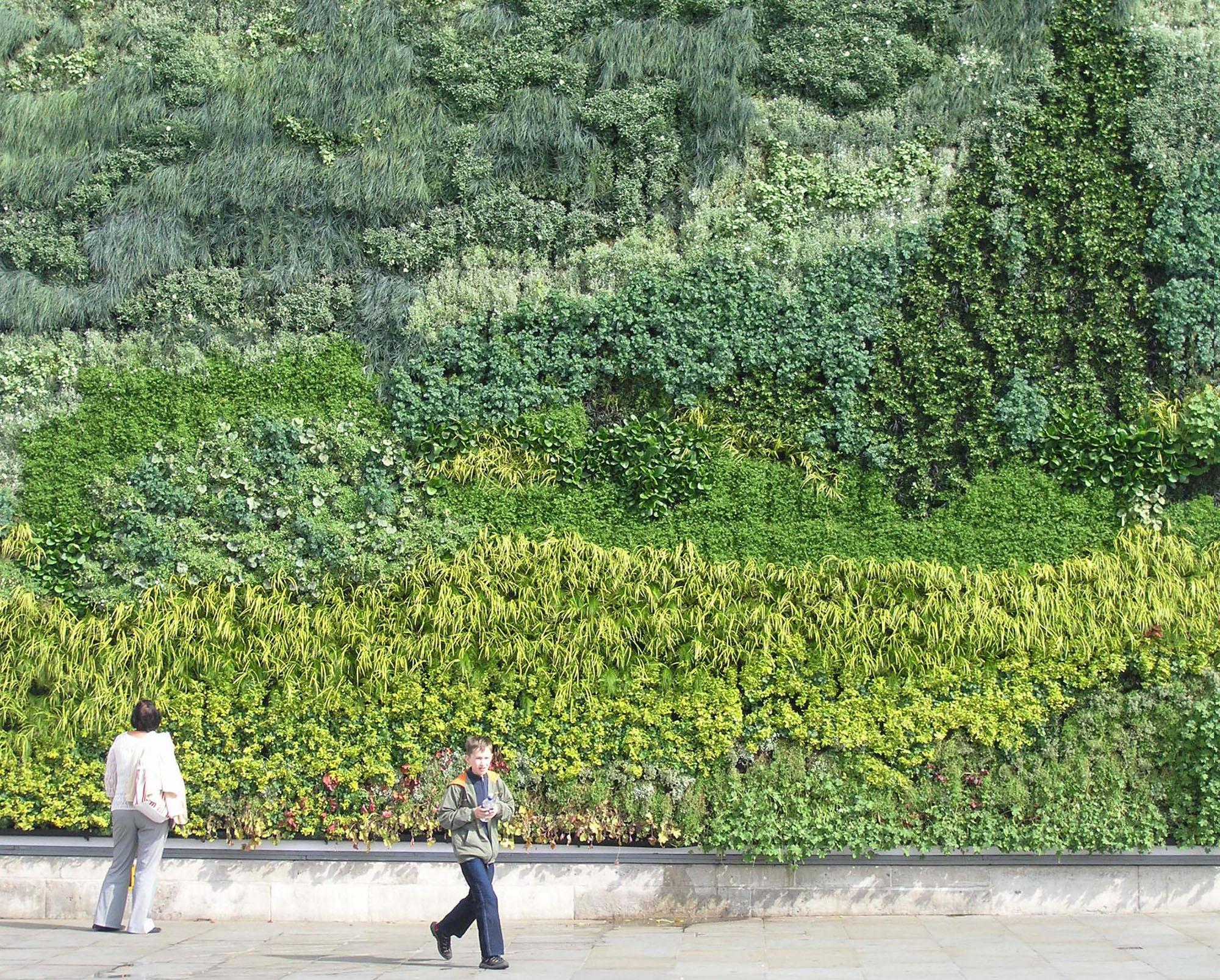 huge living wall of plants outside.