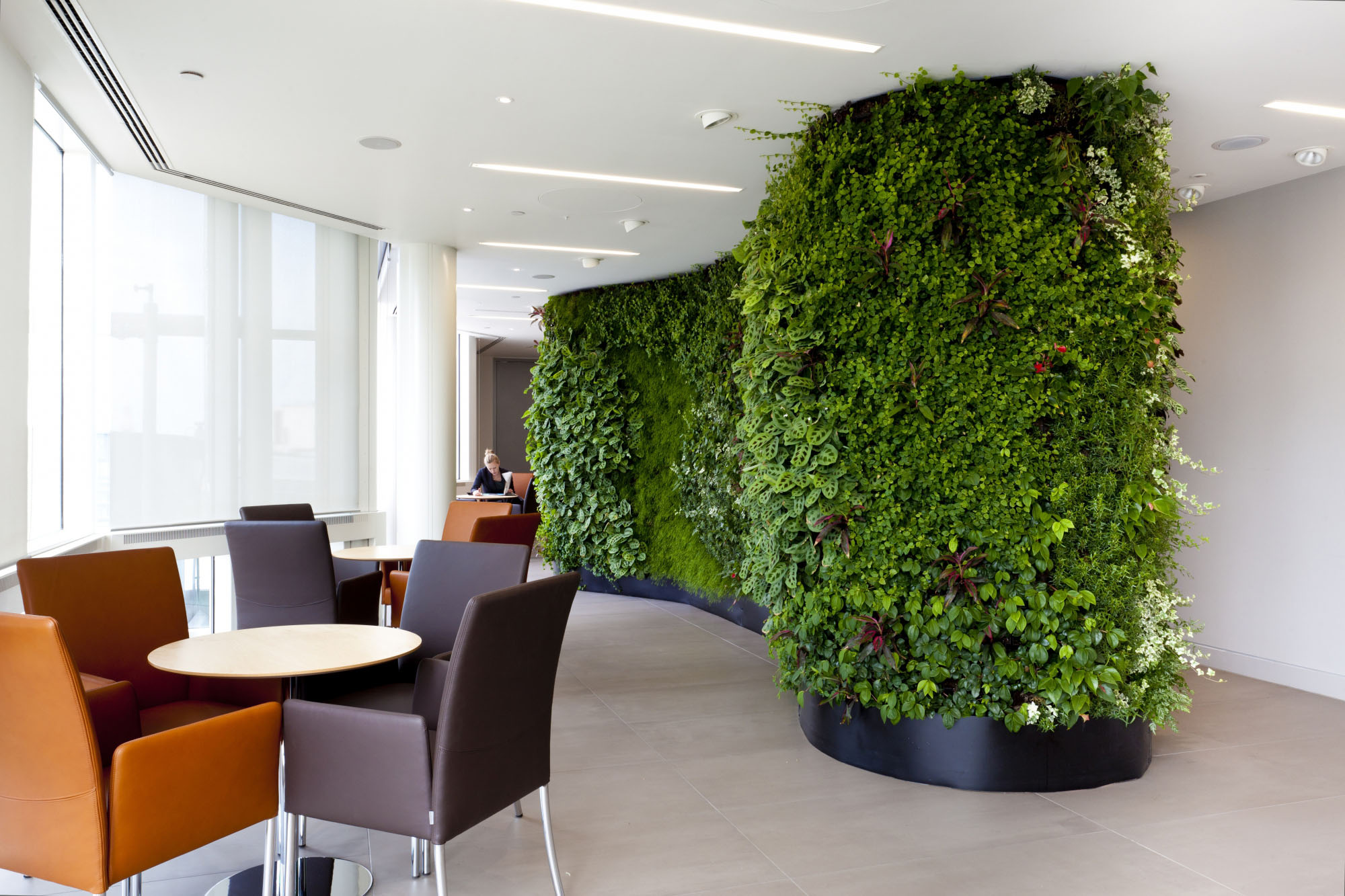 Living green wall in an office.
