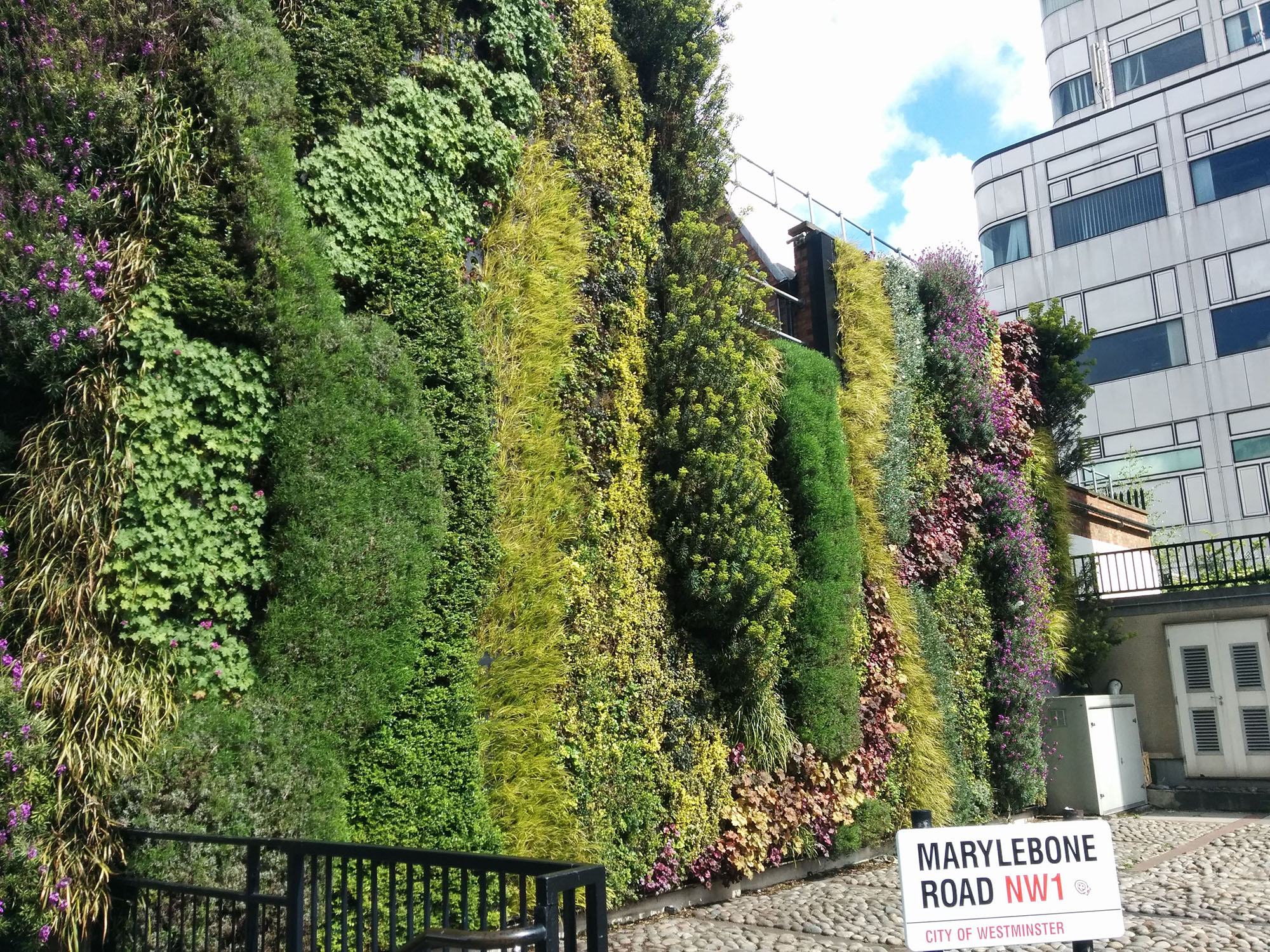 Colorful Eco wall with diverse plants in London.
