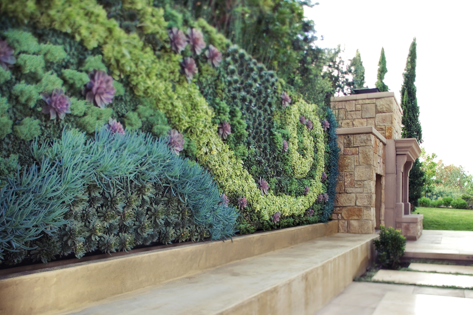 Plant wall in an outdoor garden surrounding a stone wall.